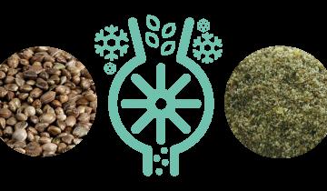 Les bienfaits des graines de chanvre moulues